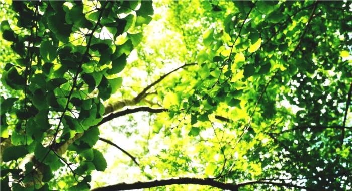 木陰のイメージ