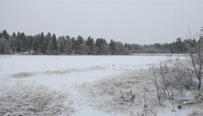 フィンランドの冬